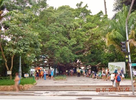 Florianópolis - Dez 2014 (77) (800x588)