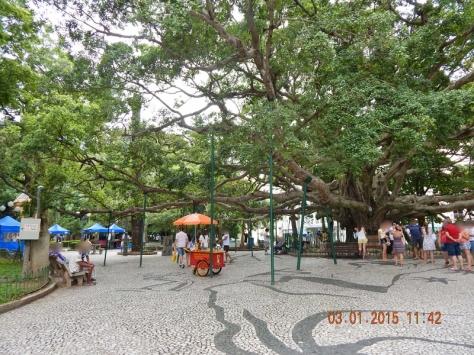 Florianópolis - Dez 2014 (78) (800x600)