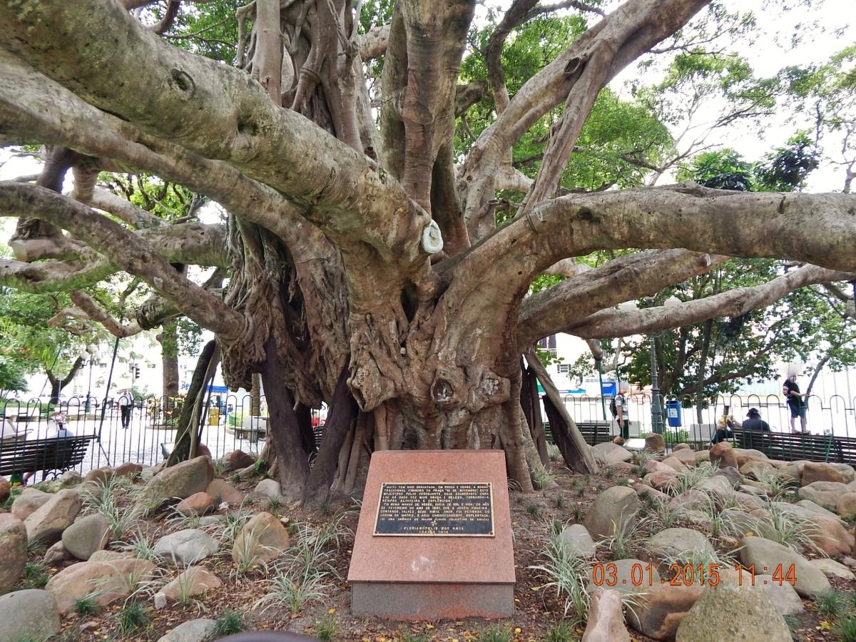 Praça XV de Novembro - Figueira Centenária - Florianópolis.