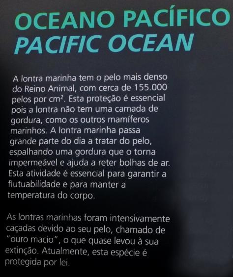lontra-marinha-corte-copia-859x1024